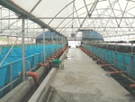 Biosecure_KOI_breeding_and_growing_intensive_facility_in_Israel_150x113.shkl.jpg